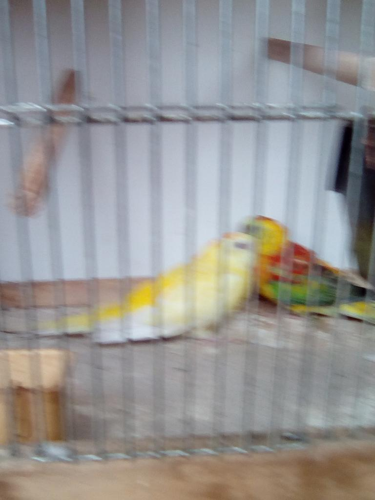 Oiseaux exposés